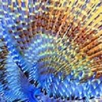 Spirographe vie sous marine
