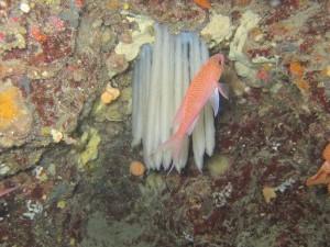 Ponte de calamar