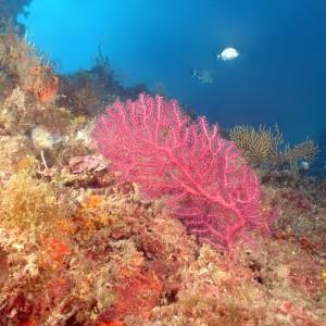 Fond marin de l'Estérel